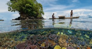 A discussion and resolution to the slowly dying marine ecology